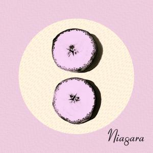 Mono-73CD Niagara Otto packshot 1400